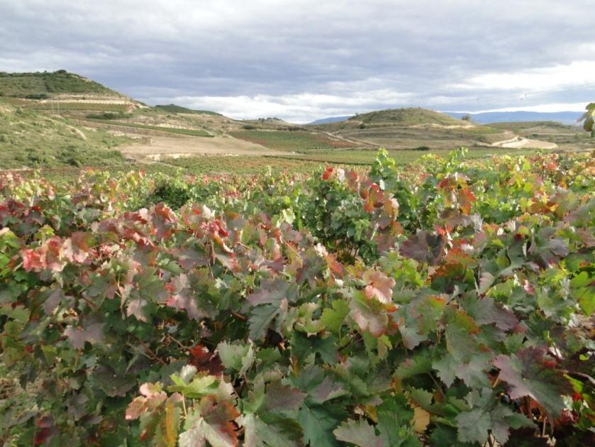 Rioja 015