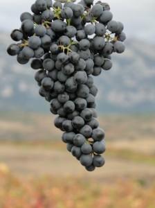 Rioja 020