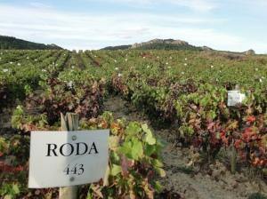 Rioja 077